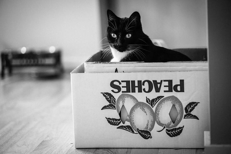 Neutron the cat in a peach box.
