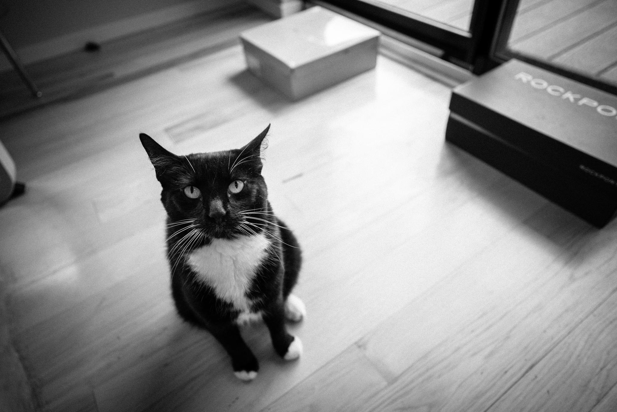 cat (useless variety)