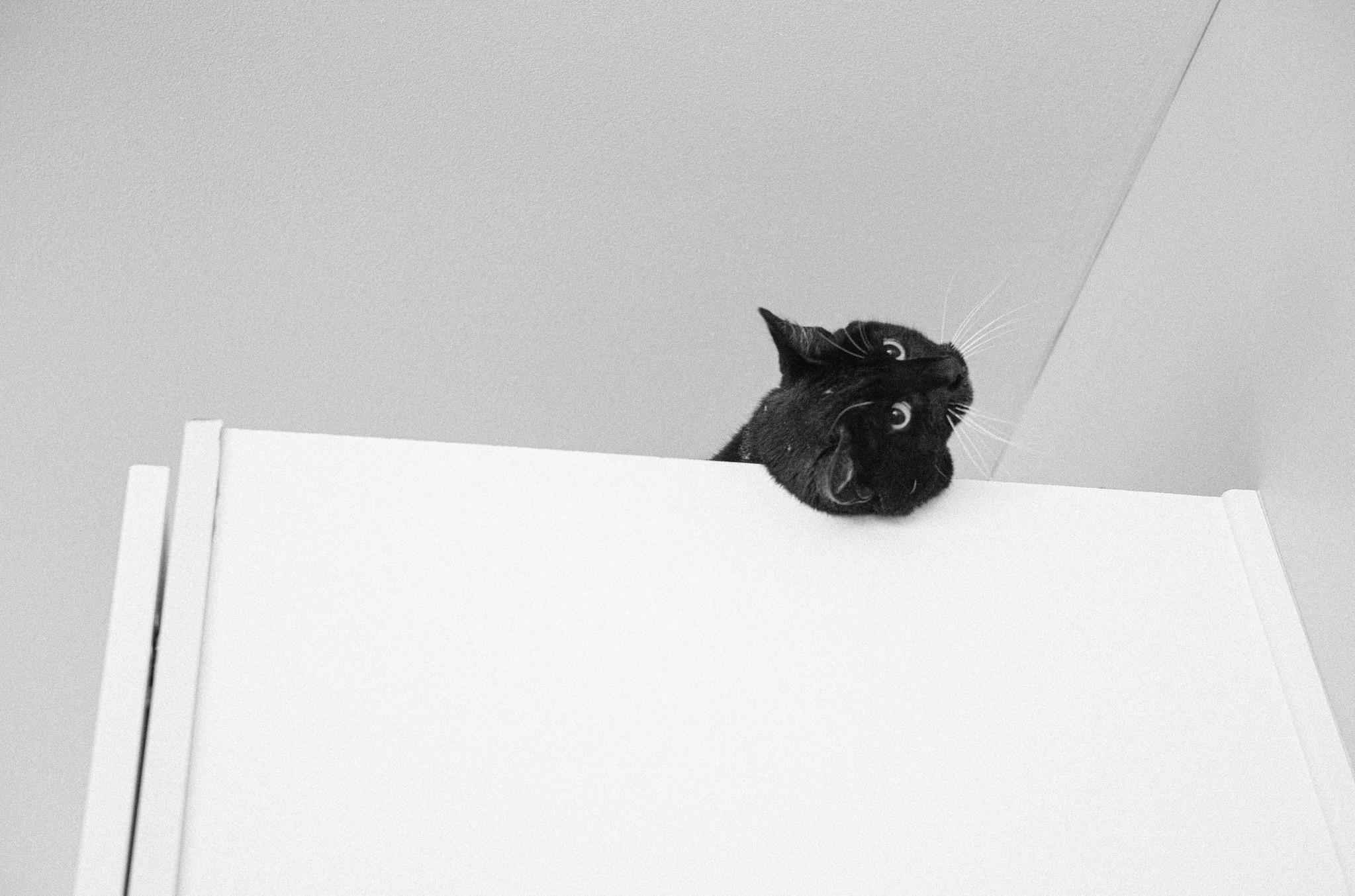 cabinet cat