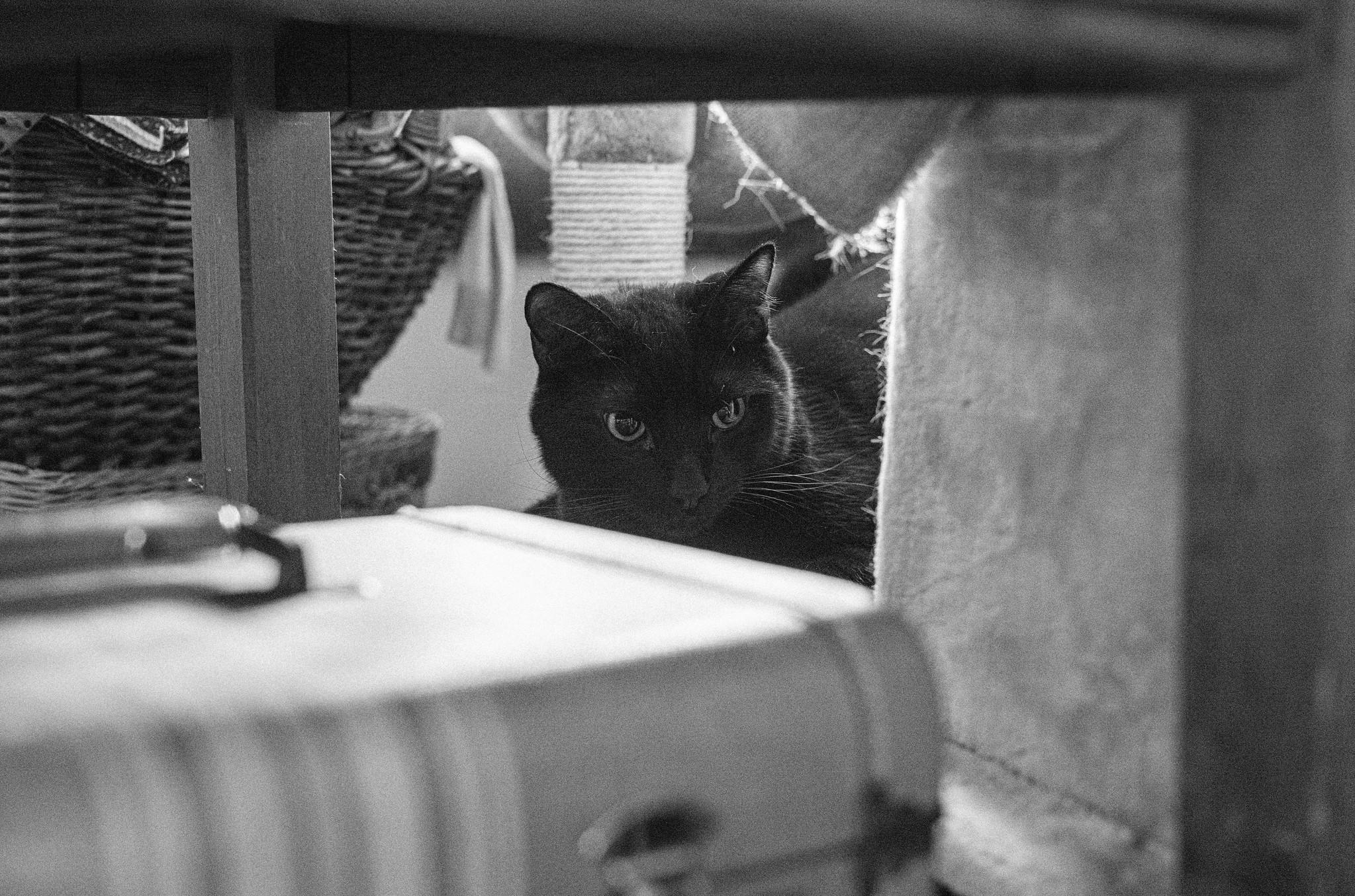 poot in hiding